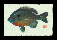Bluegill _Old Hickory Lake