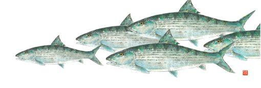 Bonefish school