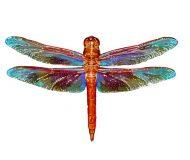 Flame Skinner Dragonfly