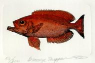 Glass eye snapper