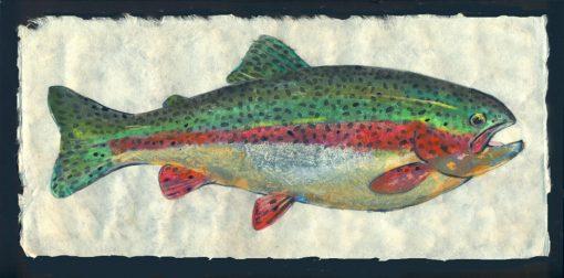 Rainbow trout (Mill Creek)