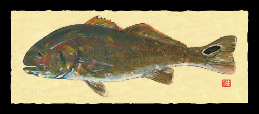 Red Drum (large)