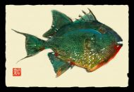 Trigger Fish 1