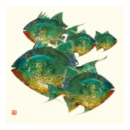 Trigger Fish 5