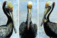 pelican all 3