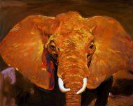 Warm Elephant